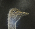 ostrich, painting