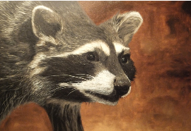 racoon, painting