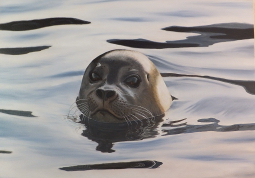 seal, painting